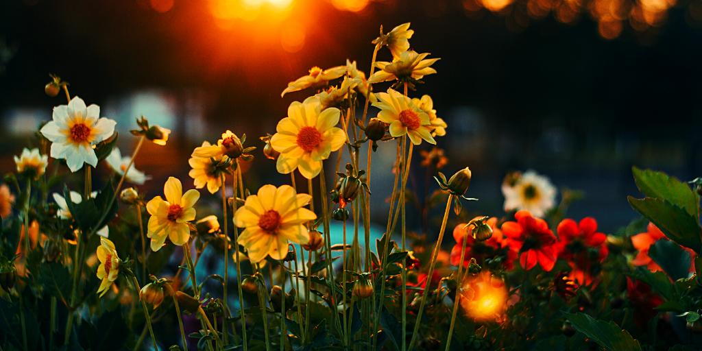 flor de cada signo